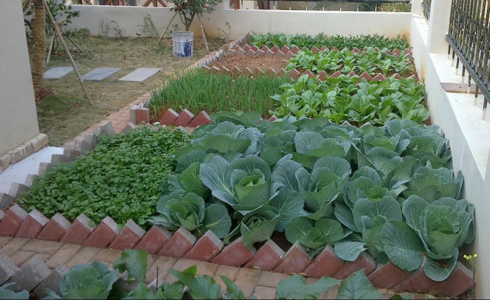 有些人会在庭院当中种植蔬菜,这是很正常的,人们希望通过这样的方式吃到干净健康的绿色食品,在设计这一类型的庭院的时候,除了要注意区分每块种植区域之间的交接,设定每块种植区域的大小以外,也要对这个种植区域的输水管道进行检查,不要把水残留在院子里,然后流进家里,要把积水放在比住宅区更低的高度,防止其倒灌。 农村庭院设计更加追求实用性,在设计的时候应该多参考邻居们的建设,希望能够多得到一些帮助。